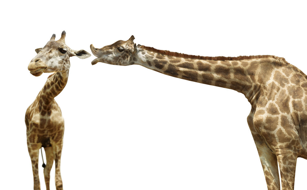 four: Gia Giraffe - kawaiikowaiimemyselfai