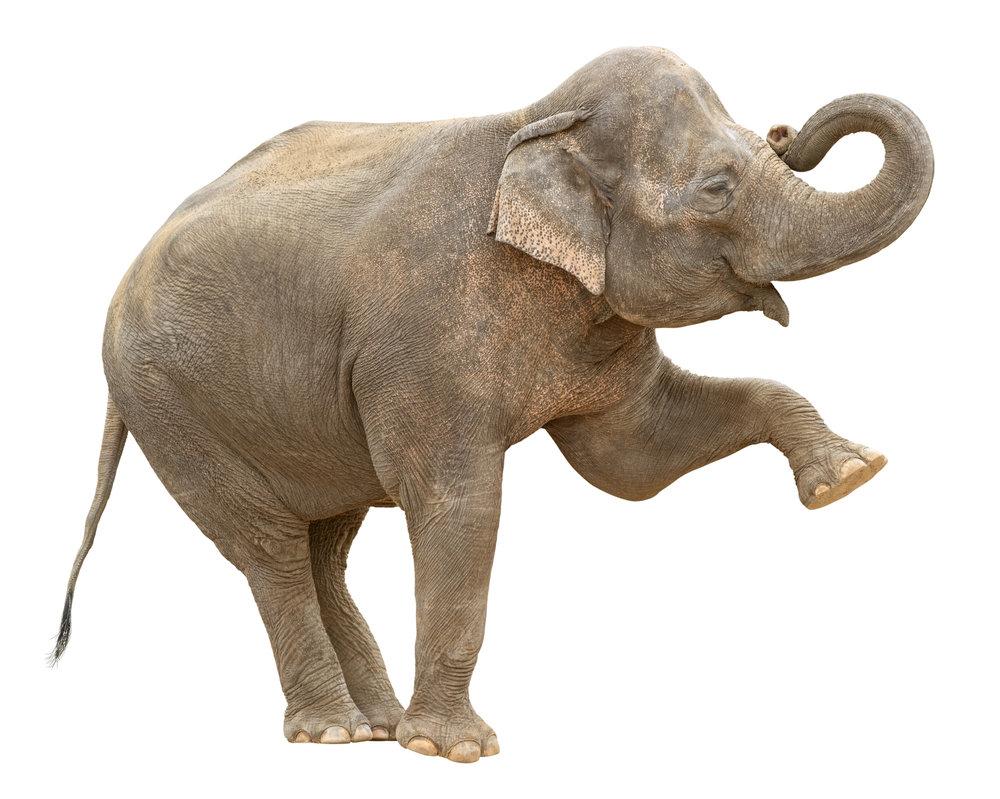 Elephants aren't for eating -