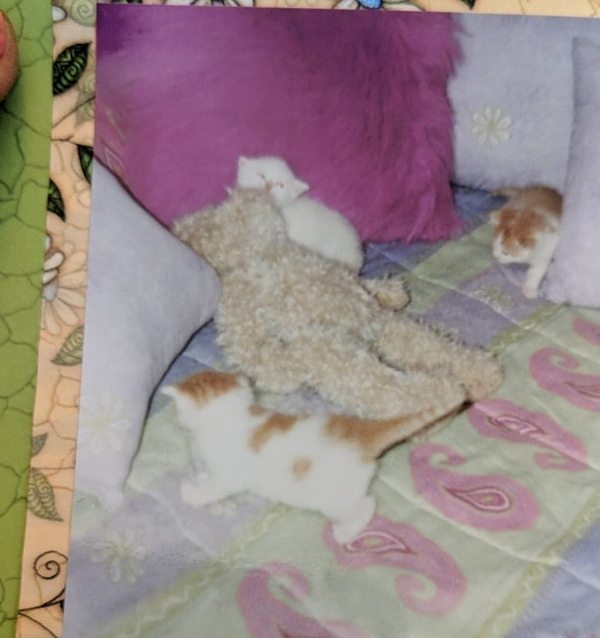 Back: Tony (rip bby) | Middle: Kotyn (My aunties cat) | Front: Scootch