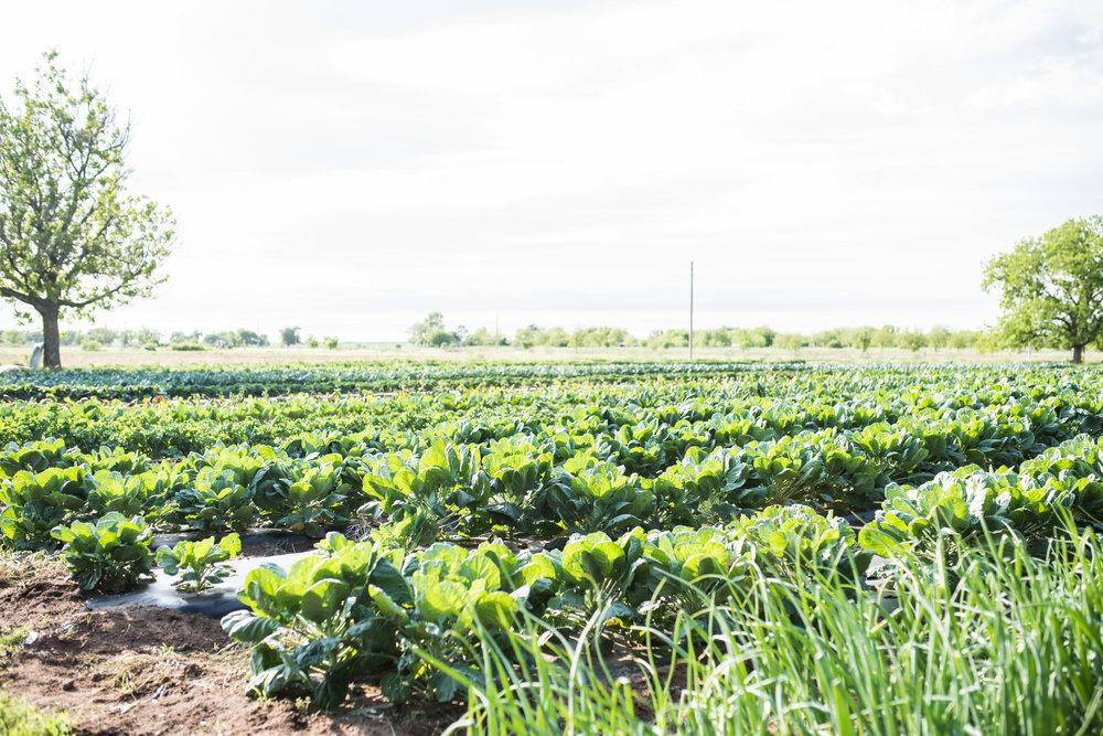 april farm dinner-34.jpg
