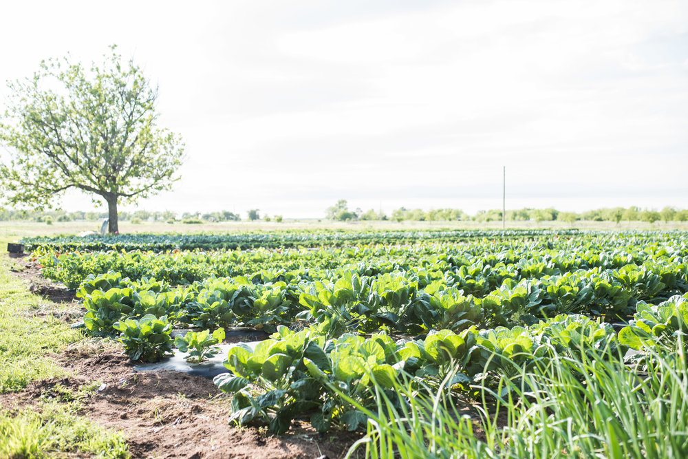 april farm dinner-35.jpg