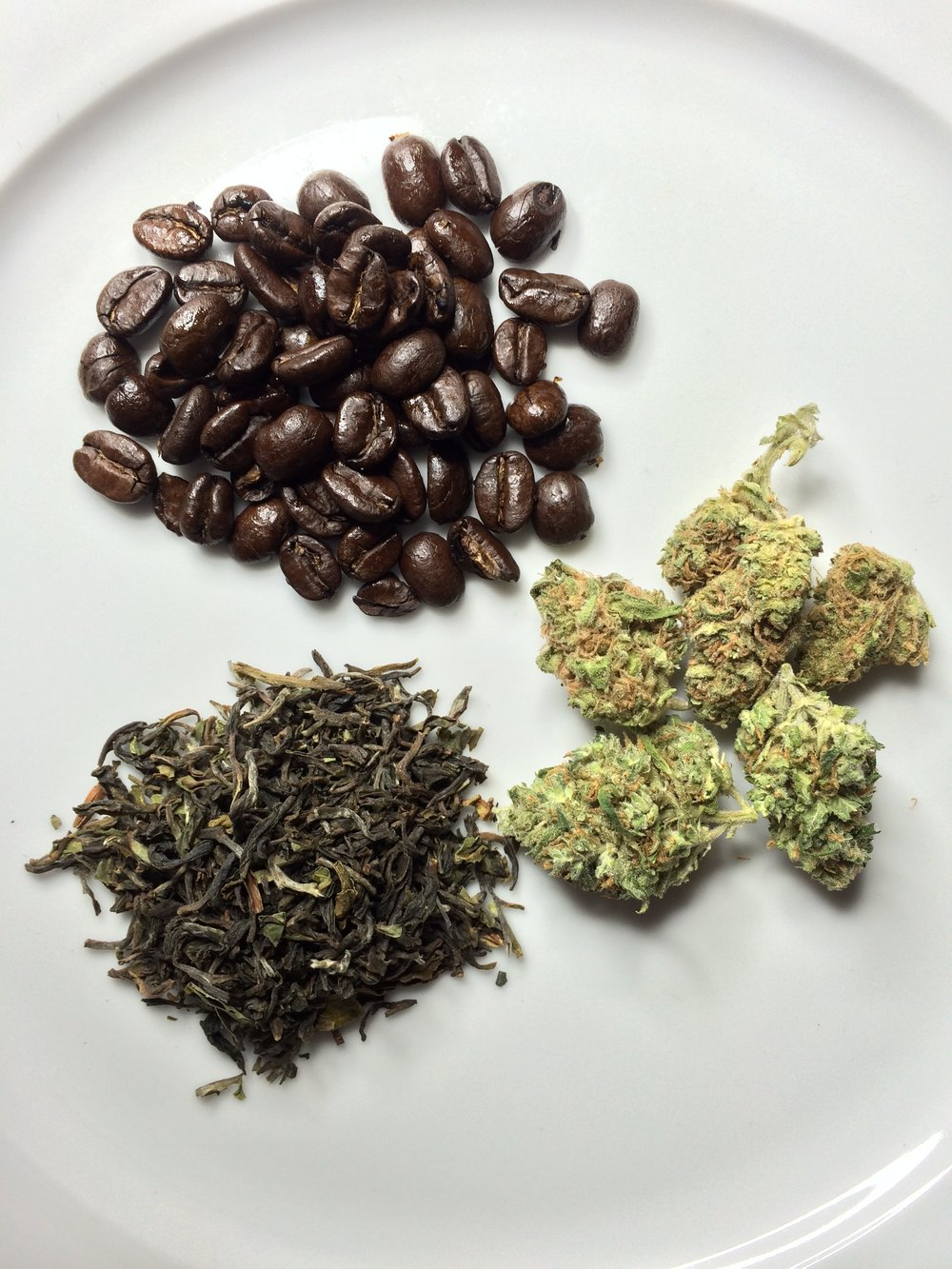 Tea Beans and bud on plate.JPG