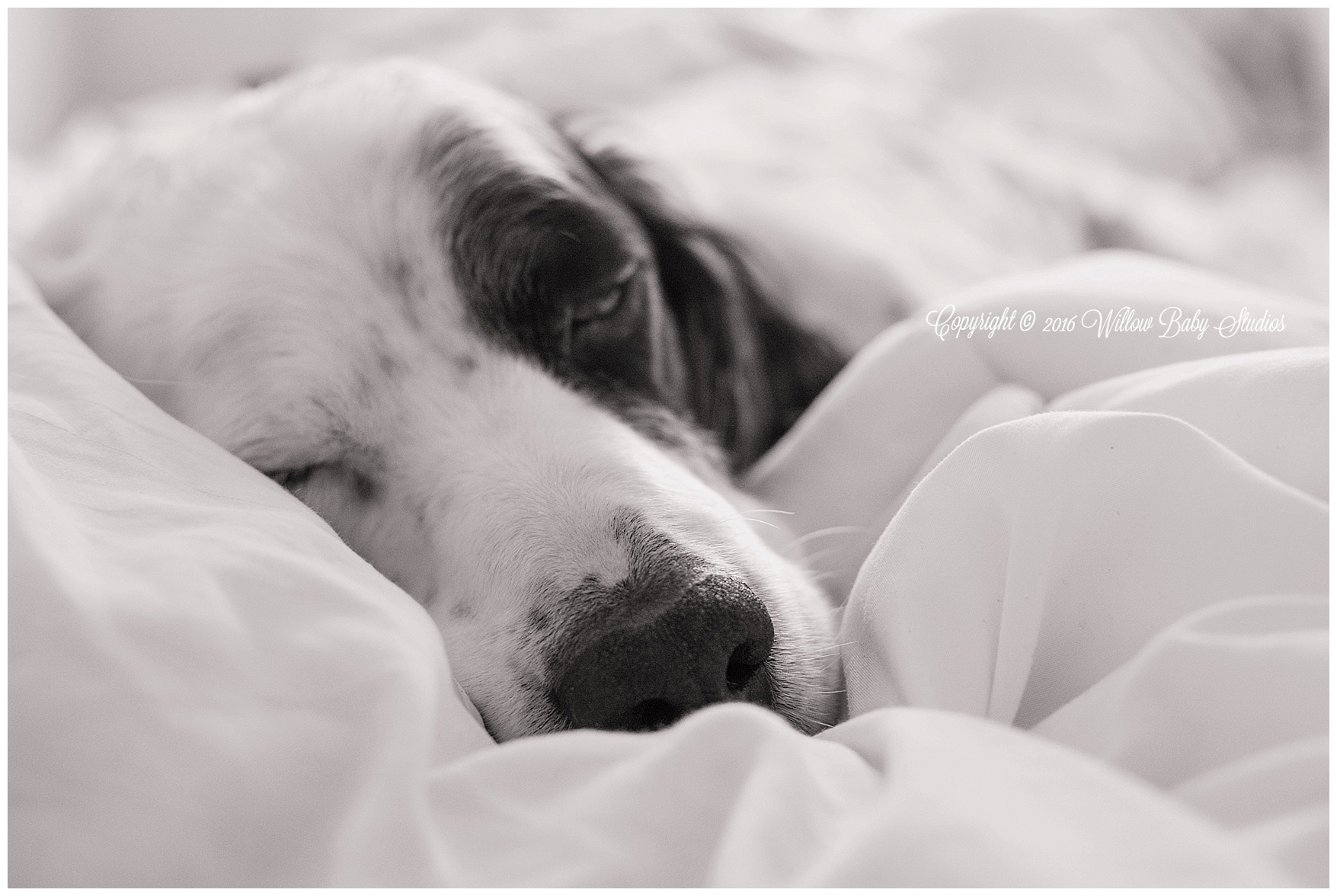 somerville_ma_family_and_pet_photographer_01
