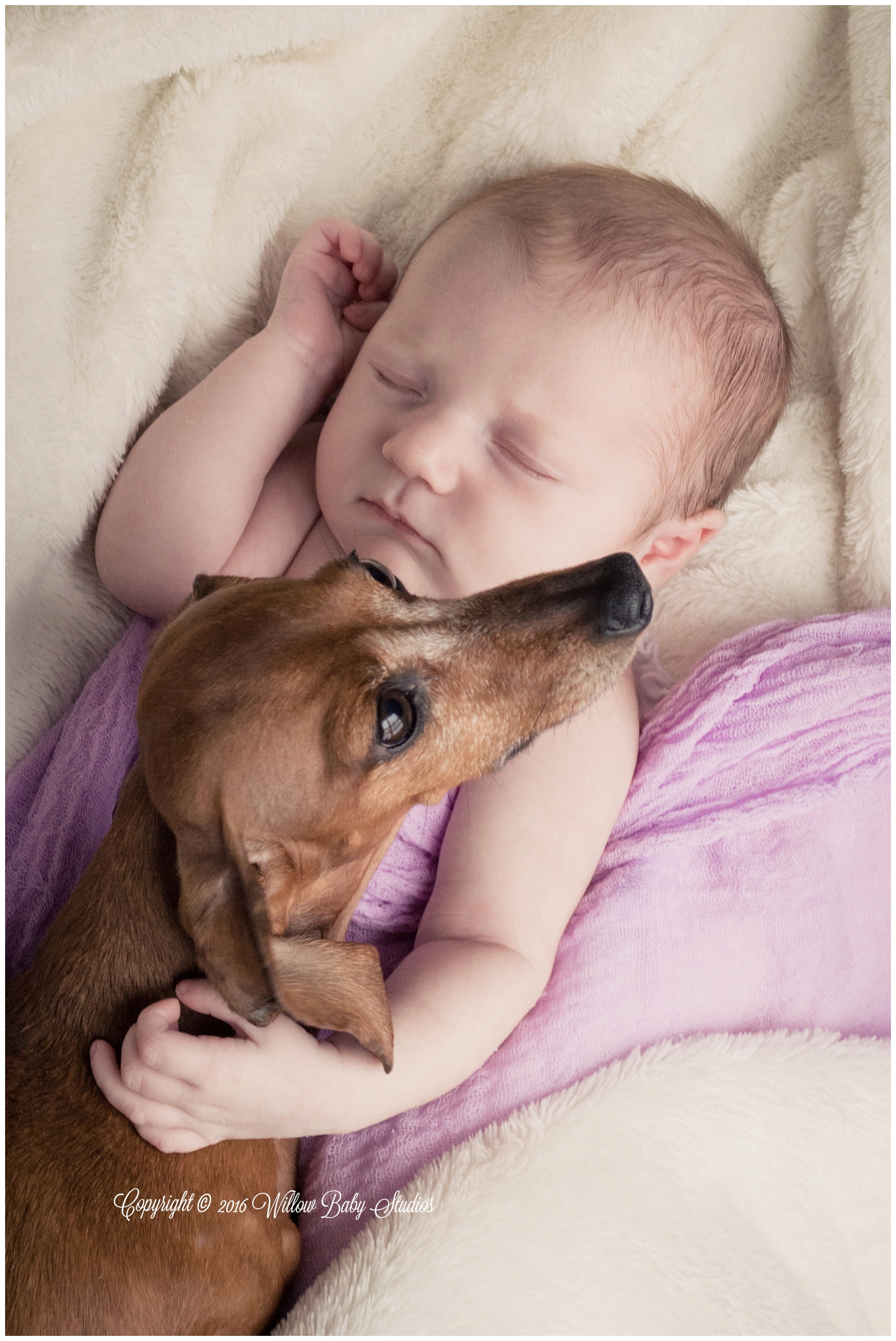 wellesley_ma_family_and_pet_photographer_01