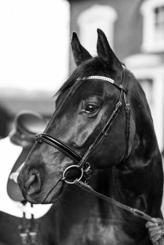 Dancing Horse-325355.jpeg