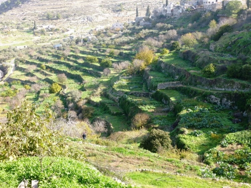 Battir's terraced farmland