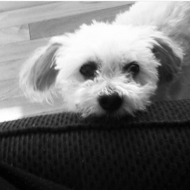 I miss my sweet boy ❤️ • • • #puppy#dogsofinstagram #dogstagram #dogs #love #dogsofig
