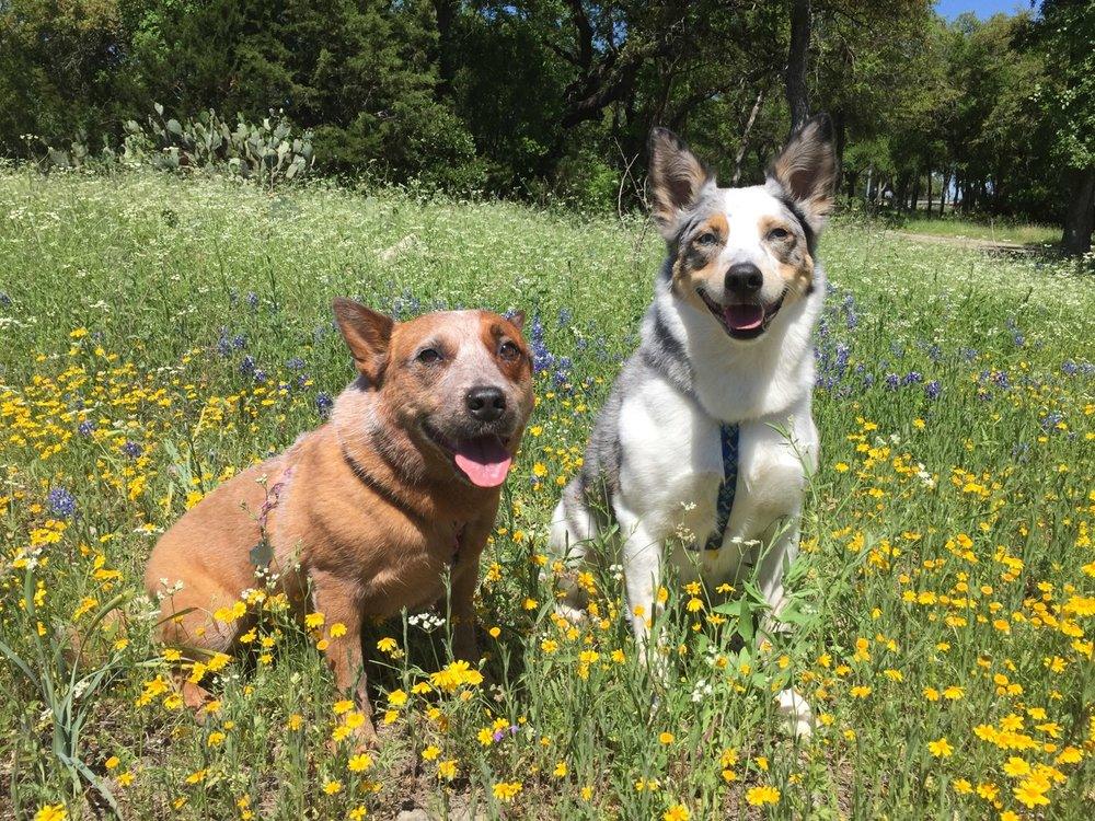 Kaylee and Dax wildflowers.jpg