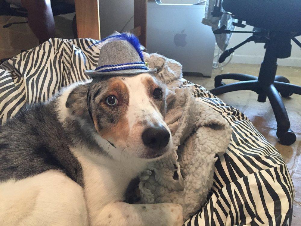 Dax Wurst hat.JPG