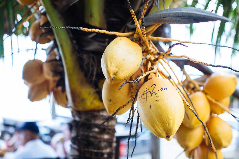 nicaragua-san-juan-del-sur-coconuts.jpg