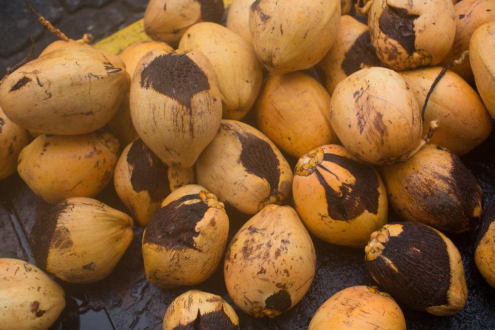 nicaragua-granada-coconuts.jpg