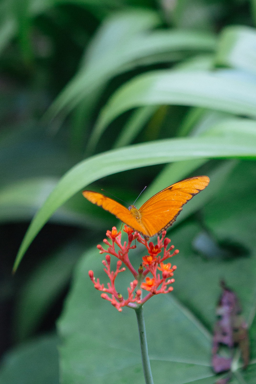 nicaragua-granada-laguna-del-apoyo-butterfly.jpg