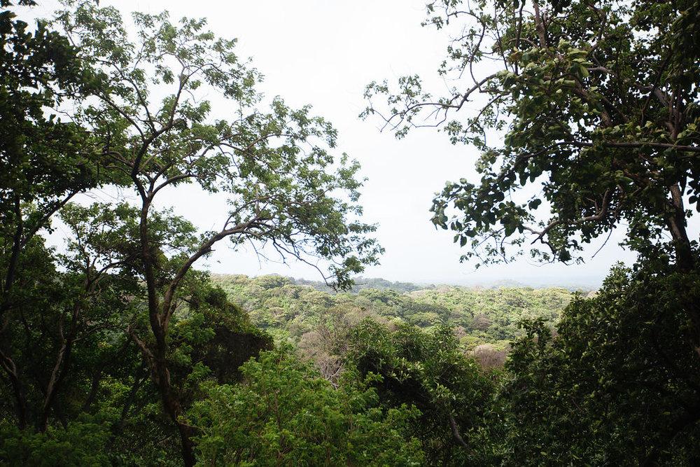 nicaragua-managua-el-camino-travel-tour-jungle.jpg