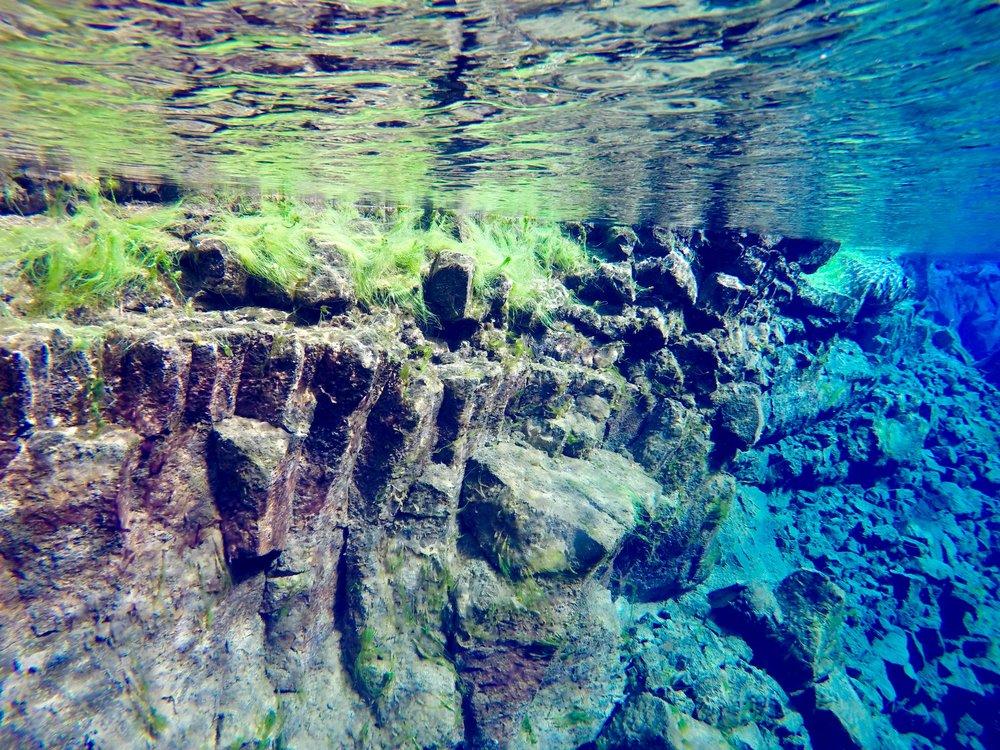 iceland-silfra-fissure-snorkel-algae.jpg