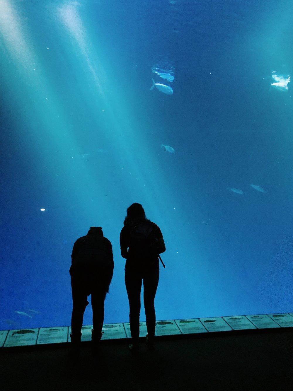 monterey-bay-aquarium-water.JPG