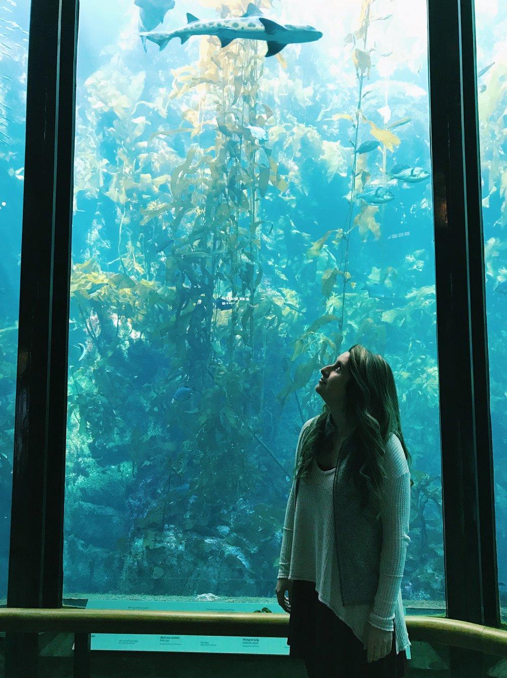 monterey-bay-aquarium-travel.JPG