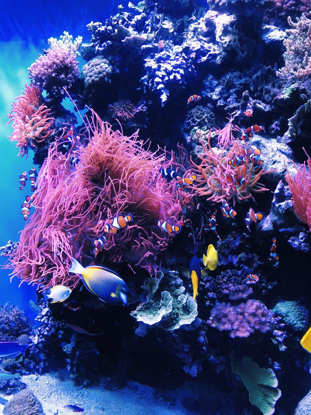 monterey-bay-aquarium-coral.JPG