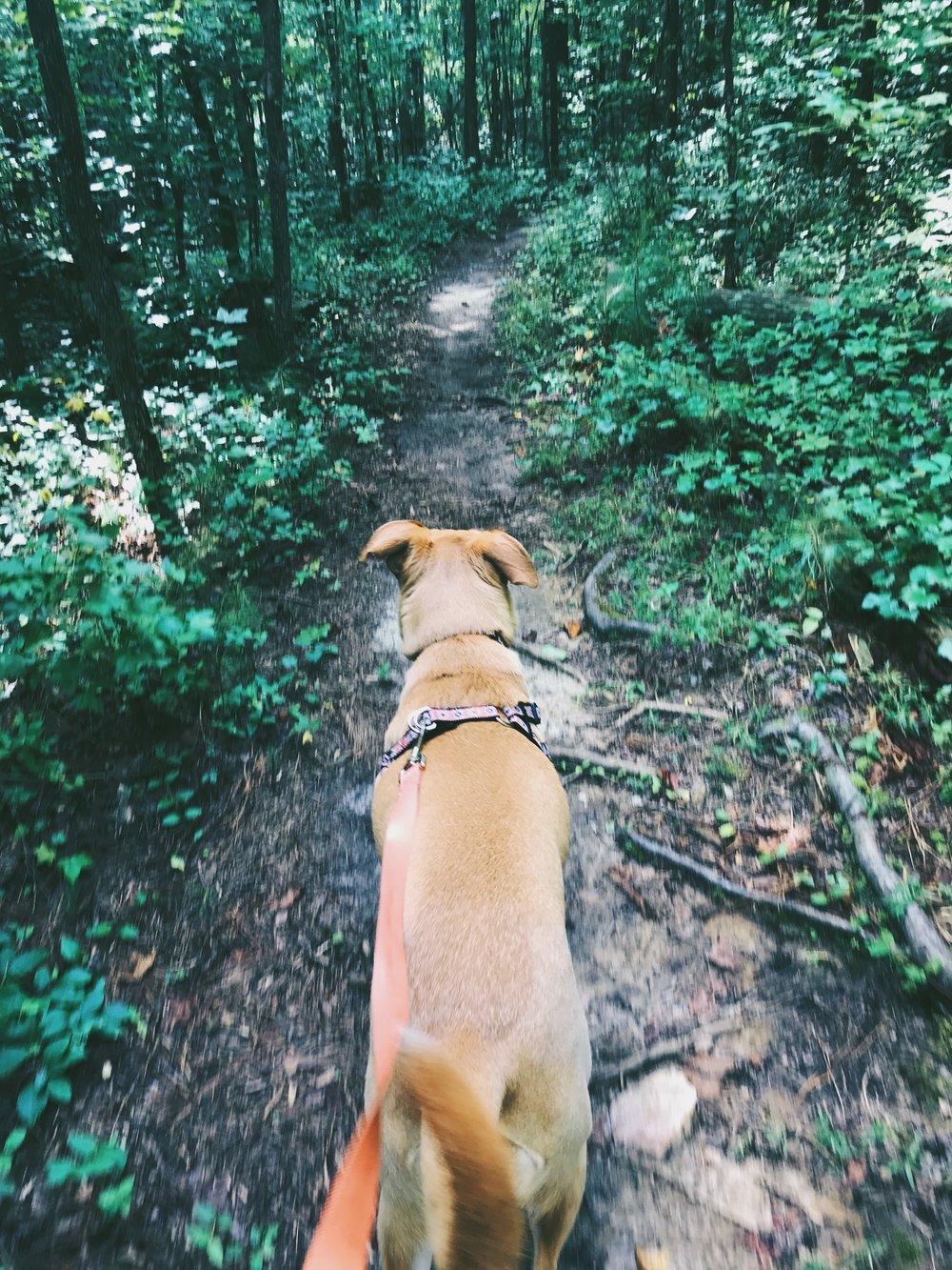self care sunday hike