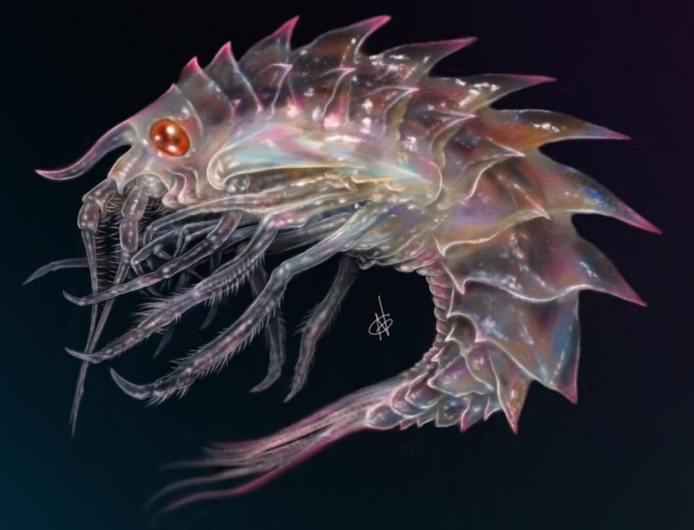A study on translucence, inspired by a multitude of small to microscopic creatures/parasites within our own oceans.