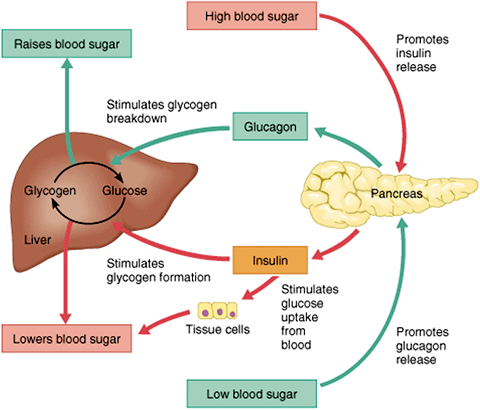 Adapted from http://millbasindoctor.com/diabetes-management-high-blood-sugar