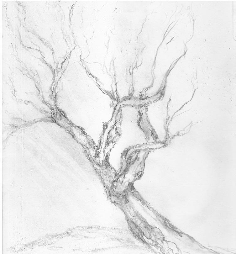 Tree on file small.jpg