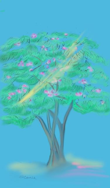 mimosa pic..png