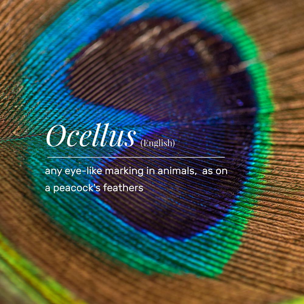 VT_ocellus.png
