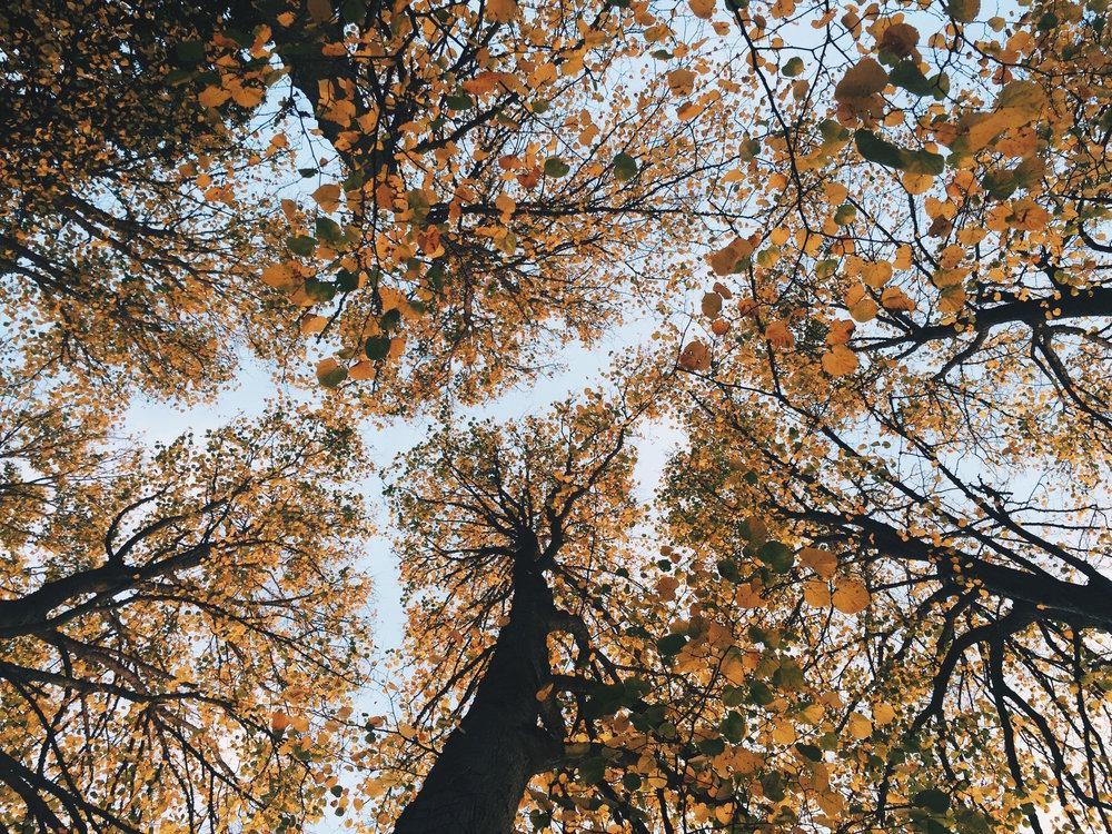 dosel arbóreo en otoño