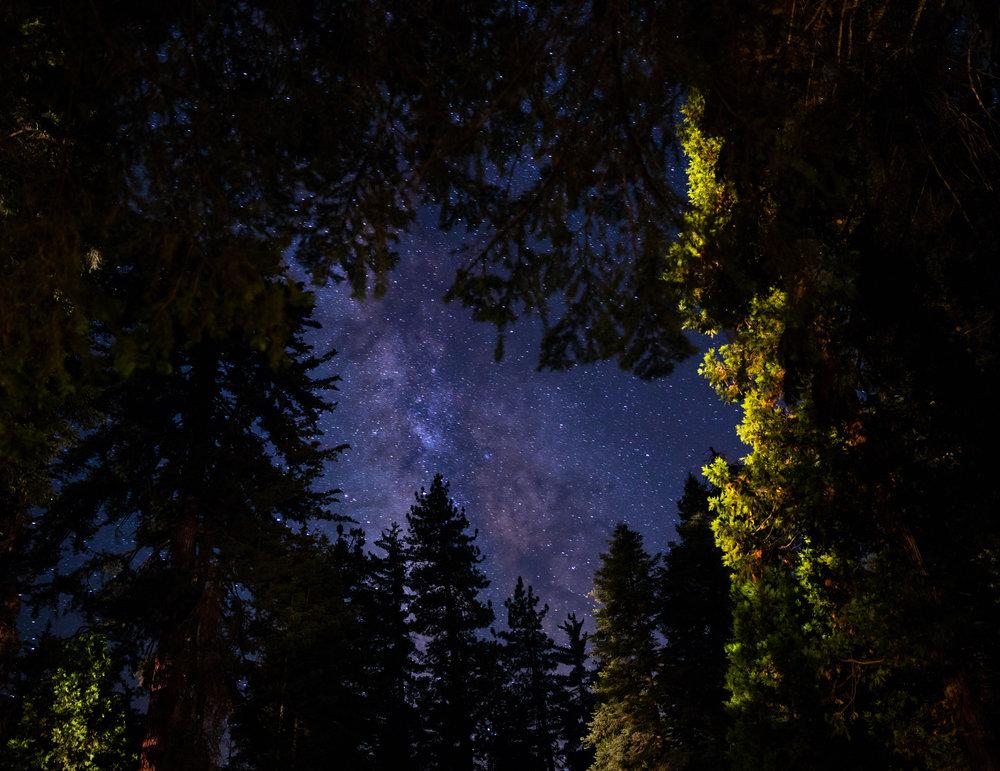 dosel arbóreo de noche