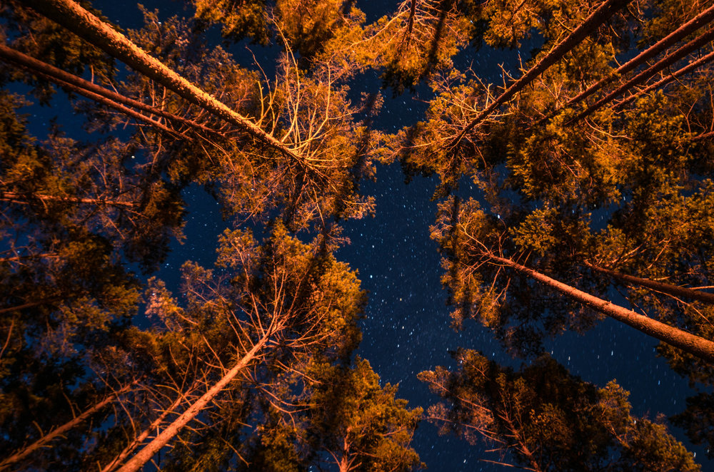dosel arbóreo visto desde abajo