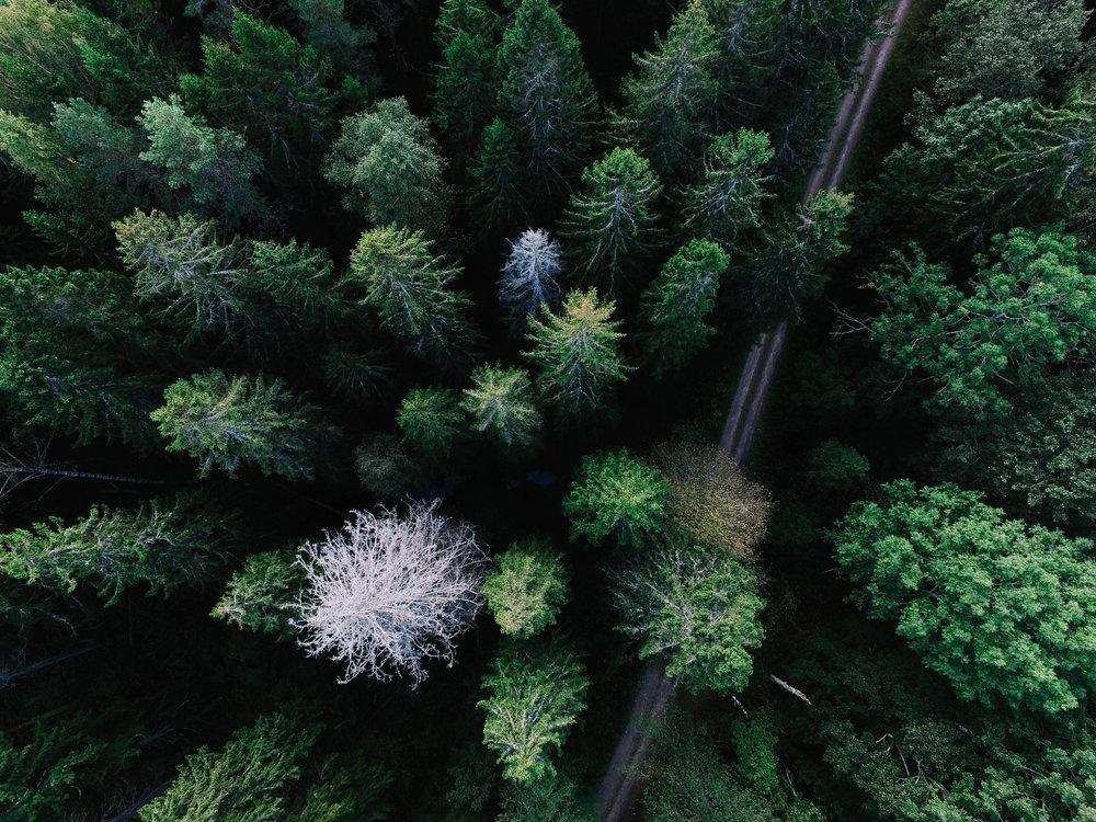 dosel arbóreo visto desde arriba
