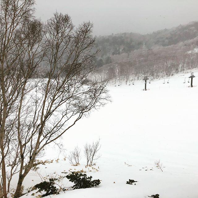 ちょっと季節外れてしまいましたが 毎年恒例の雪山🏔にきております。 夫婦でスノボ🏂です。 わたしは温泉♨️が目的なのですが。 遊びは感性を元気💪🏻にします。 子供のようにはしゃいできます😉