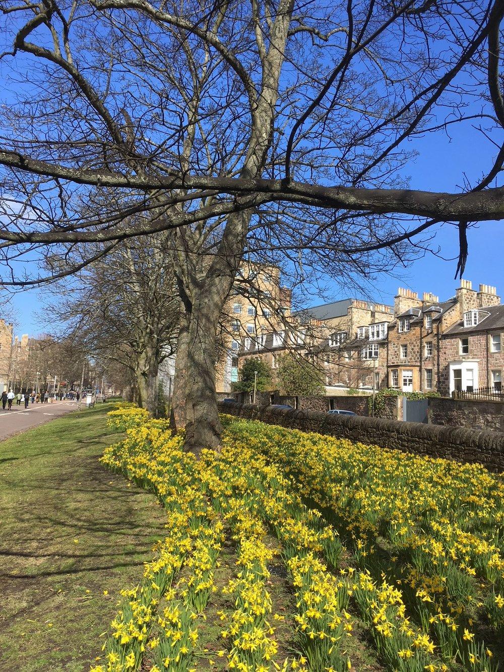 Middle Meadows Walk, Edinburgh