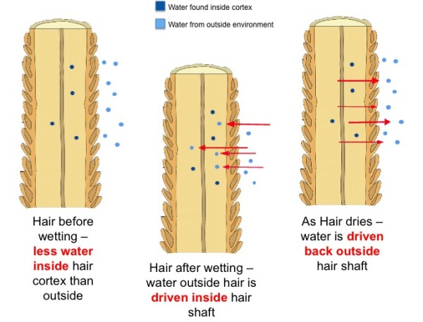 High porosity hair diagram before and after the water-based moisturizing phase.