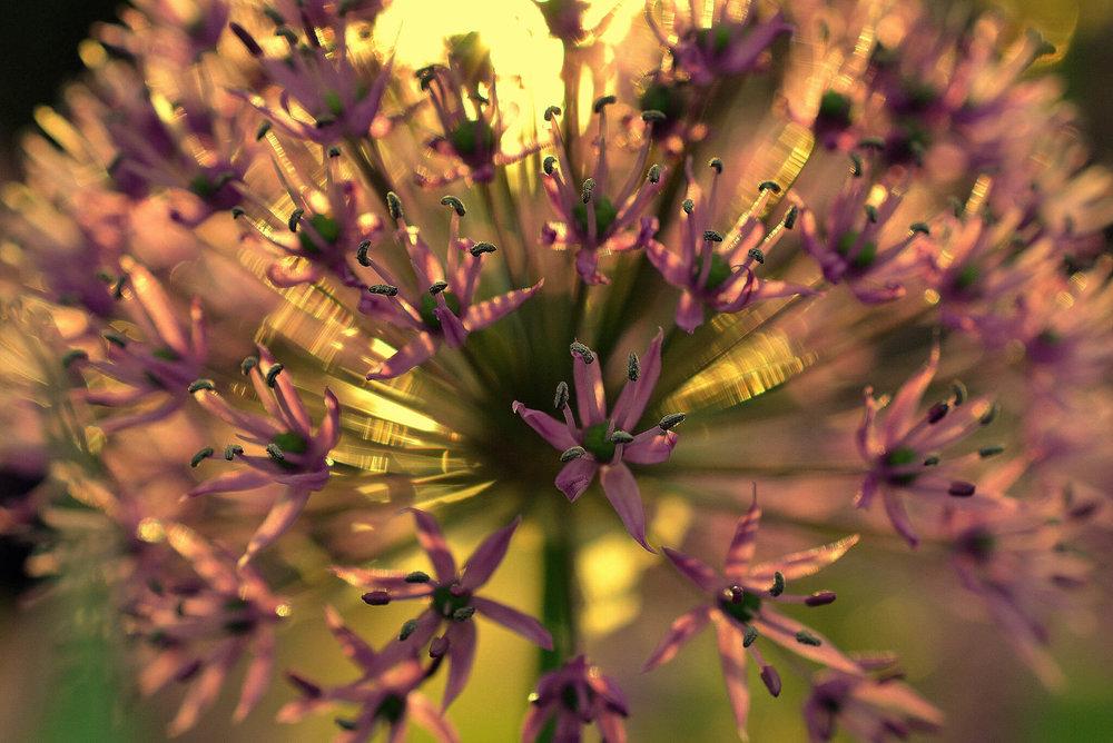 Mindfulness and Gratitude