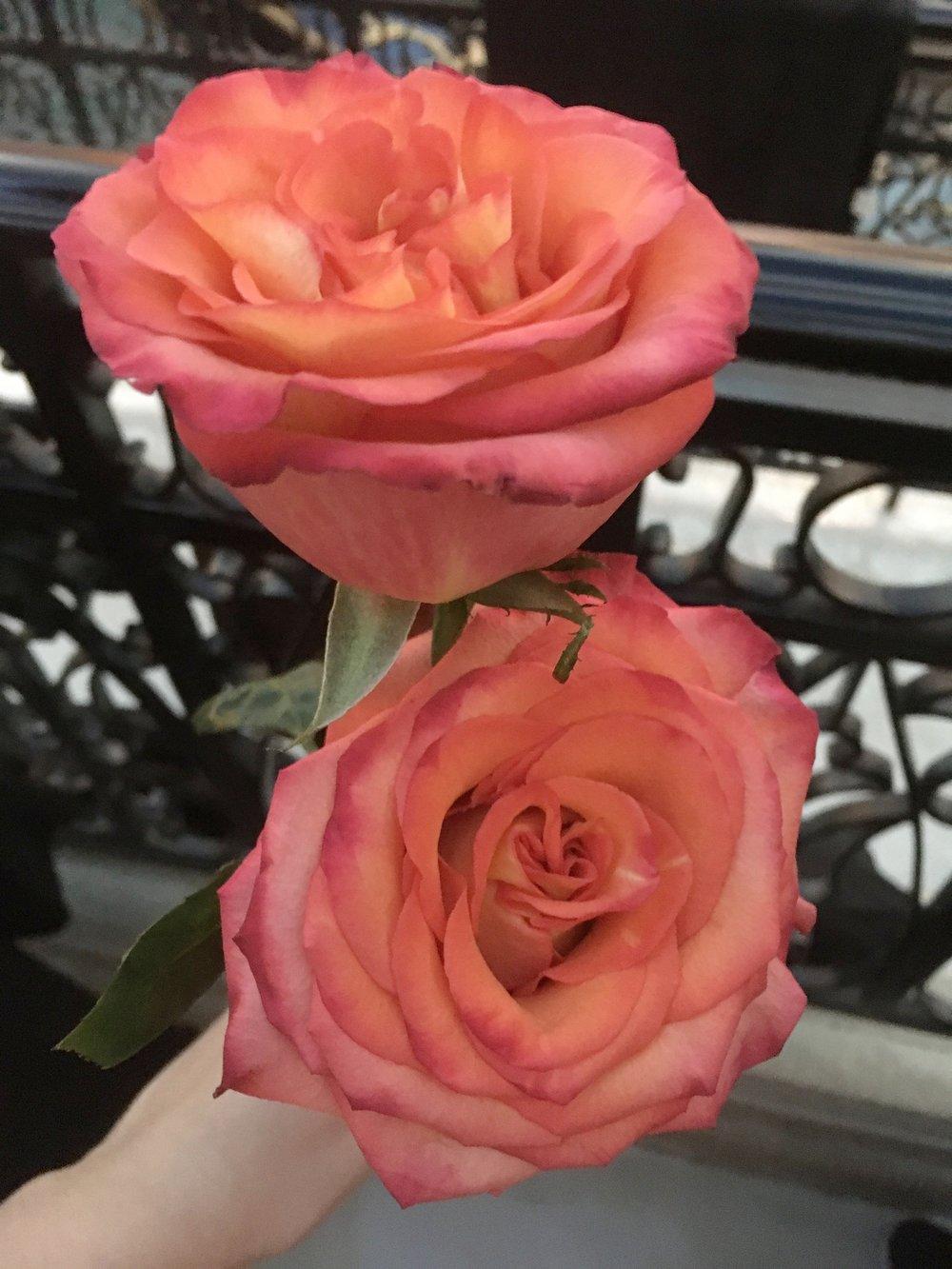 Gondola Rose