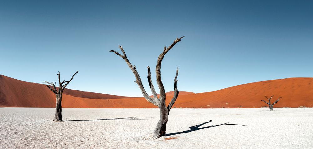 TreesOfDeadvlei_FBed.jpg