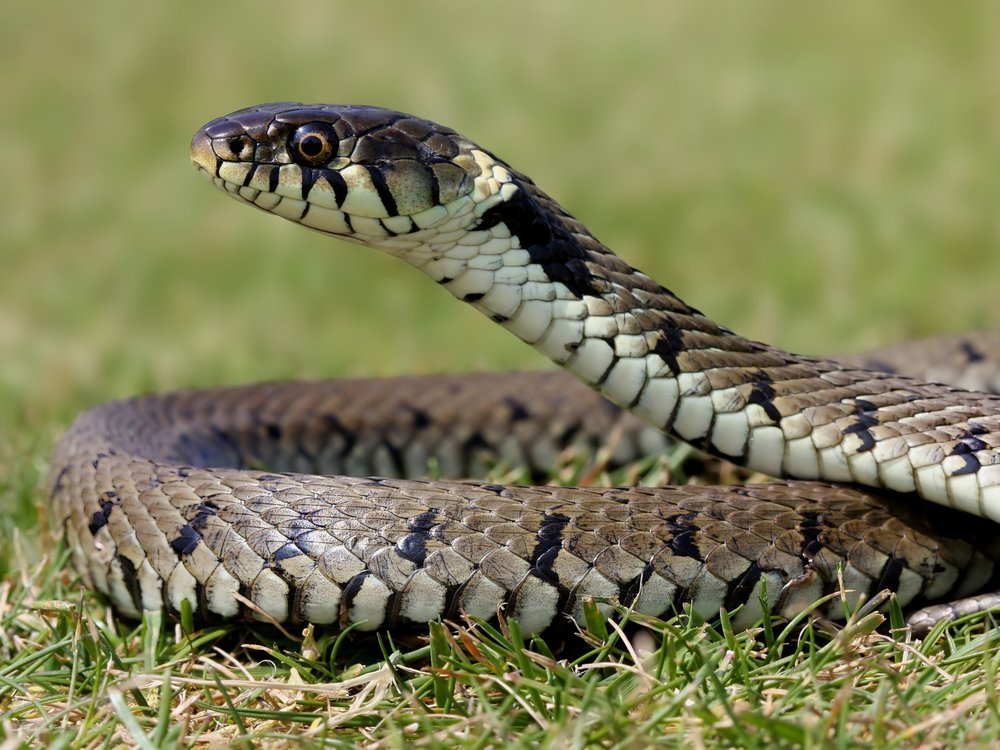 Reptiles -