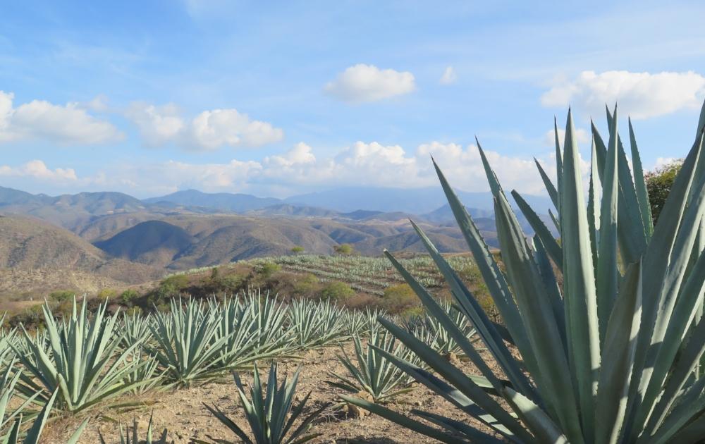 Garcia Palenque, Yegole, Mexico