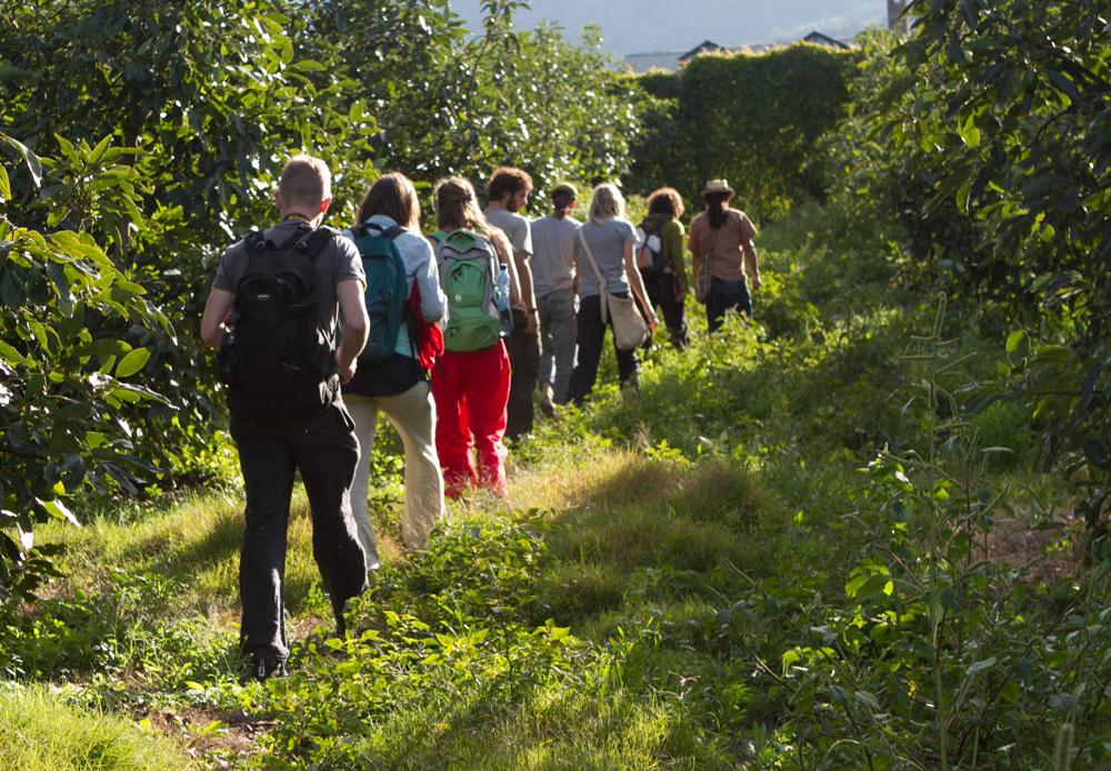 kula-collective-yoga-teacher-training-yoga-forest-hike.jpg