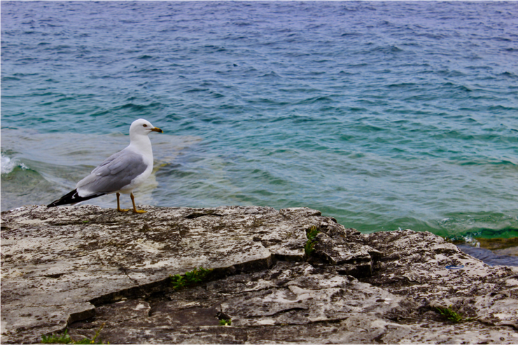 seagull, letting spirit soar, a bird's life