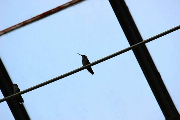 a bird's life, kula collective blog post