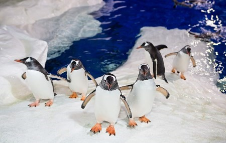 penguins-ice-water-ocean-sea-animal