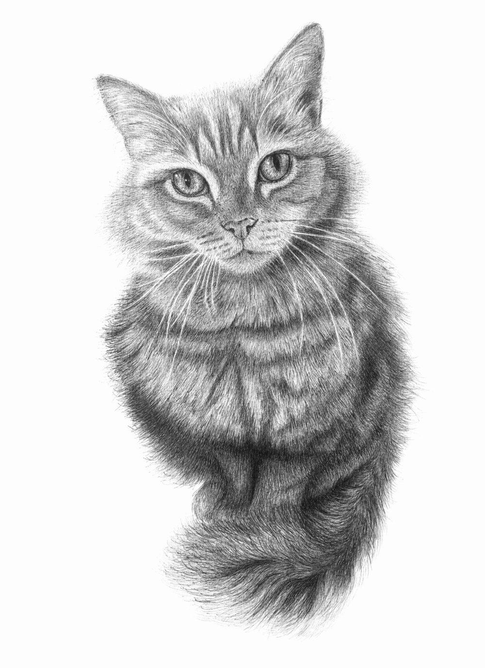 "Custom pet portrait of ""Poppy"""