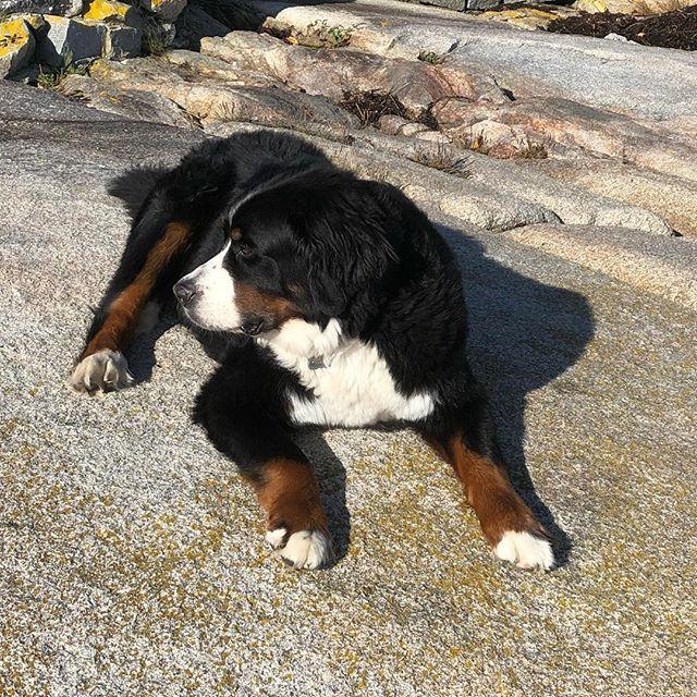 Duke taking in the sun and salt air!