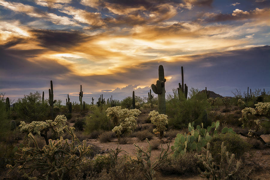 a-beautiful-sonoran-desert-evening-saija-lehtonen.jpg