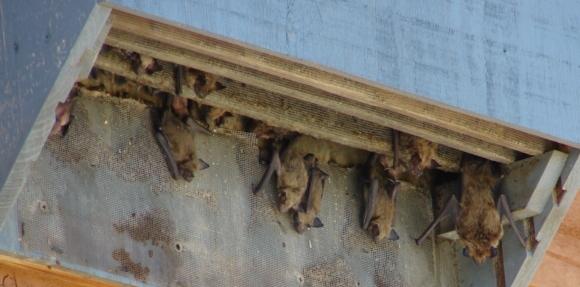 bat-habitats.jpg