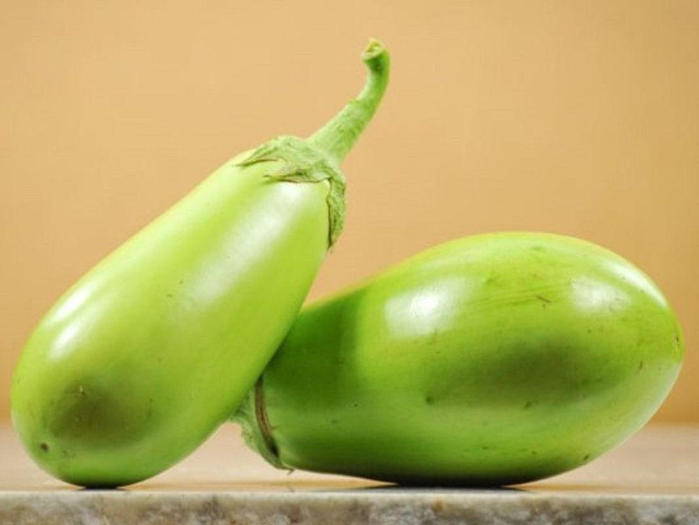 Solanum melongena - Little Green Eggplant