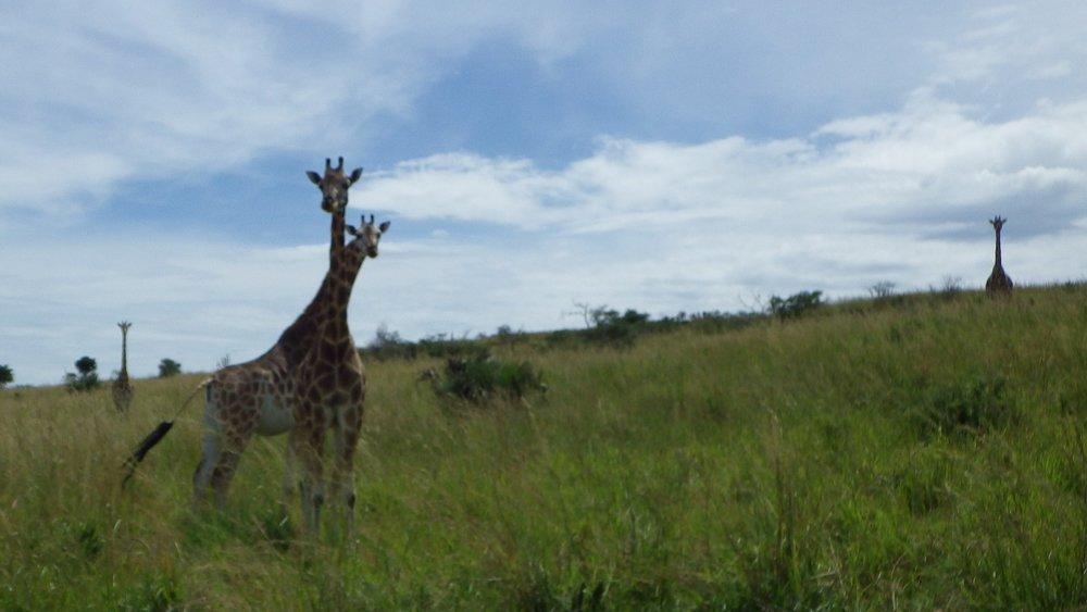 Africa 2012 587.JPG