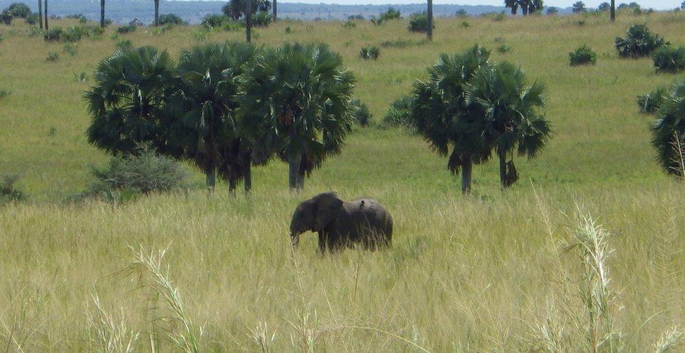 Africa 2012 592.JPG